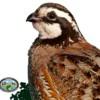 Quail Habitat Management Meeting Scheduled