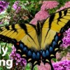Butterfly Gardening Class Tuesday In Prescott