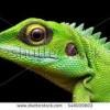 Reptiles at Grandview Prairie