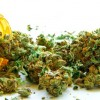 Applications For Medical Marijuana Now Available