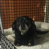 Hope Animal Shelter
