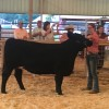 Hempstead County Cattle Show