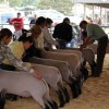 Southwest District Sheep and Goat Show Judging